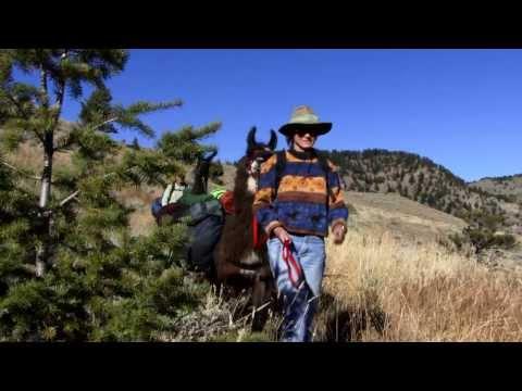 Yellowstone Safari Llama Treks