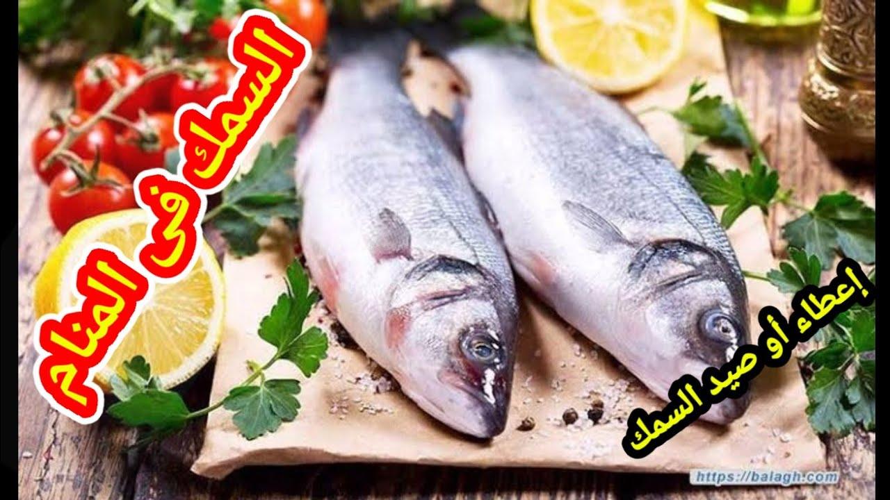 تفسير الاحلام السمك في المنام تفسير اهداء السمك أو صيد السمك فى المنام تفسير الاحلام Tafsir Ahlam Youtube