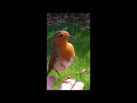 A Grieving Mother At Son's Grave Is Visited By Red Robin After She Had Asked For Sign.