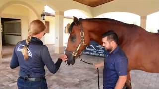 How To Introduce Your Horse to the WALK Treadmill   HORSE GYM USA®