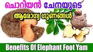 ചൊറിയൻ ചേനയുടെ ആരോഗ്യ ഗുണങ്ങൾ | Health benefits of Elephant Foot Yam | Malayalam Tasty World
