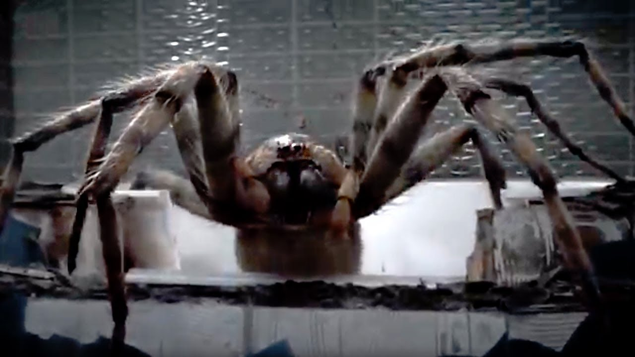 Download Giant Spider Attack!   Arachnids in the UK   Doctor Who