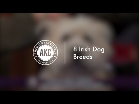 8 Irish Dog Breeds