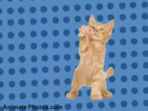 Dancing Cats - Go Kitty Go!