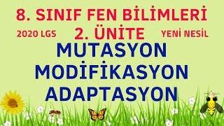 MUTASYON | MODİFİKASYON | ADAPTASYON / 8. SINIF FEN BİLİMLERİ