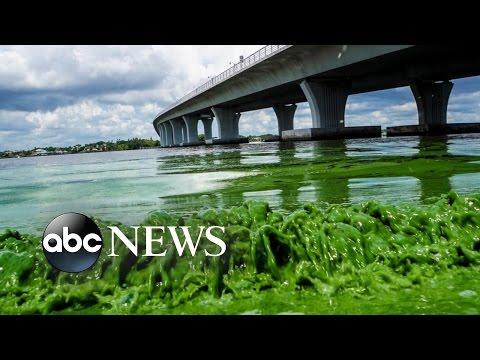 Toxic Algae Bloom Cancels Some Florida July 4th Celebrations