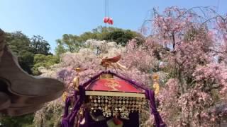 2017年 熱海 伊豆山神社例大祭 宮出