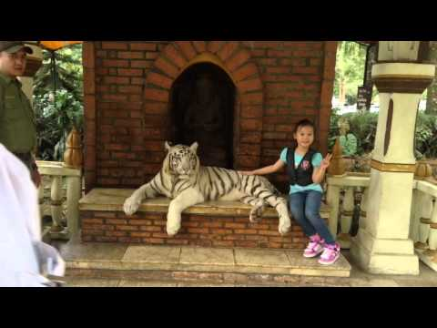 Taking a Picture with white tiger