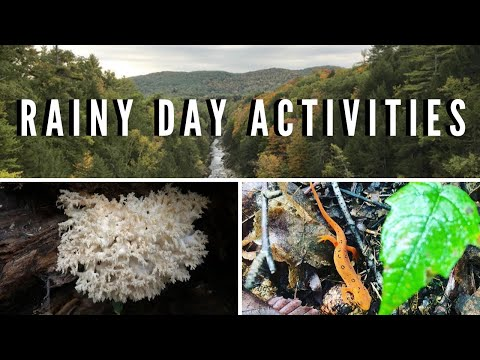 Rainy Day Activities in Nature for Kids and Adults