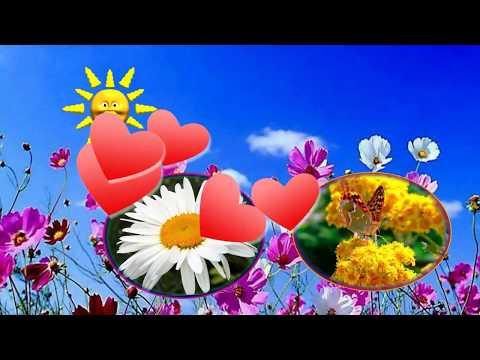 Самый красивый цветок...