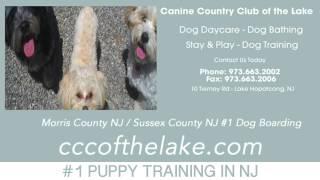 Dog Training Sussex County Nj