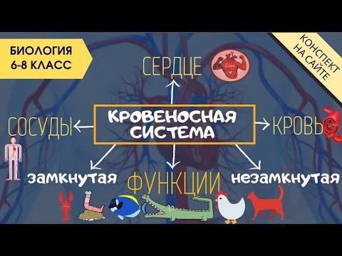 Кровеносная система животных. Биология 7 класс. Кровь. Сердце. Круги кровообращения.  Функции крови.
