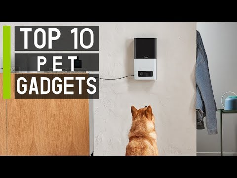 Top 10 Amazing Pet Gadgets & Toys You Must Have in 2019