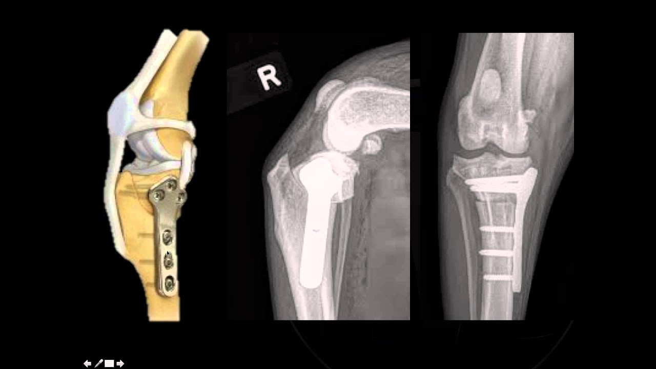 Small Dog Knee Surgery