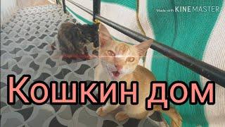 Misha Migo - Сняли новый дом в Гоа, в подарок получили 8 кошек