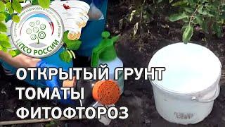 Как бороться с фитофторой. Обработка томатов от фитофтороза.(, 2015-06-09T12:49:32.000Z)