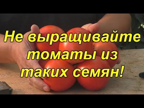 Какие семена томатов лучше не использовать для выращивания?