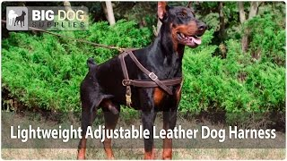 Training Leather Dog Harness For Dobermann And Other Large Dogs