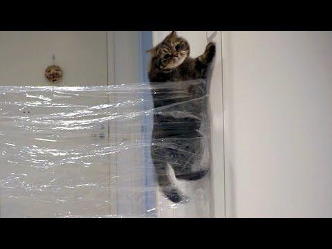 Как высоко может прыгнуть кот?; How high can cat jump?