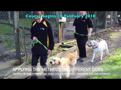 2018 Part Time Dog Trainer Course  - Melbourne Australia