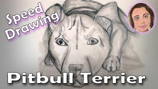 Speed Drawing: Pitbull Terrier