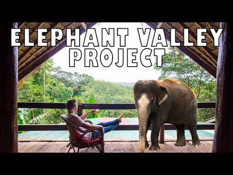 The Elephant Valley Project Experience | Senmonorom,  Cambodia