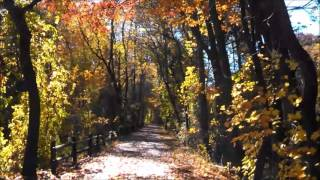 Riding my Bicycle on the South County Trailway in Autumn
