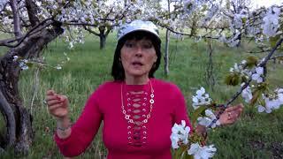 Секс после 45 (часть1)Репетиция , пробное видео на природе