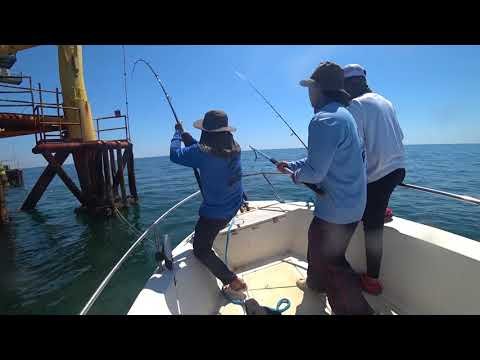 Offshore Cobia Fishing In Galveston