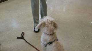 富山県動物管理センターで行っている無料のしつけ教室にいきました。 う...