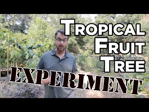 SF Bay Area Tropical Fruit Tree Experiment