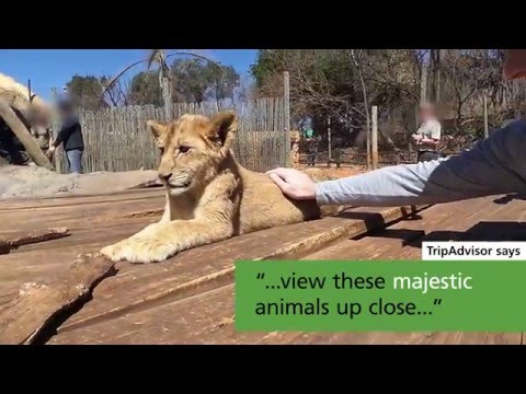 TripAdvisor is profiting from wildlife cruelty