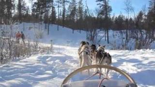 Dog-Sledding in Geilo, Norway
