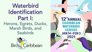 Caribbean Waterbird Census Birdscaribbean