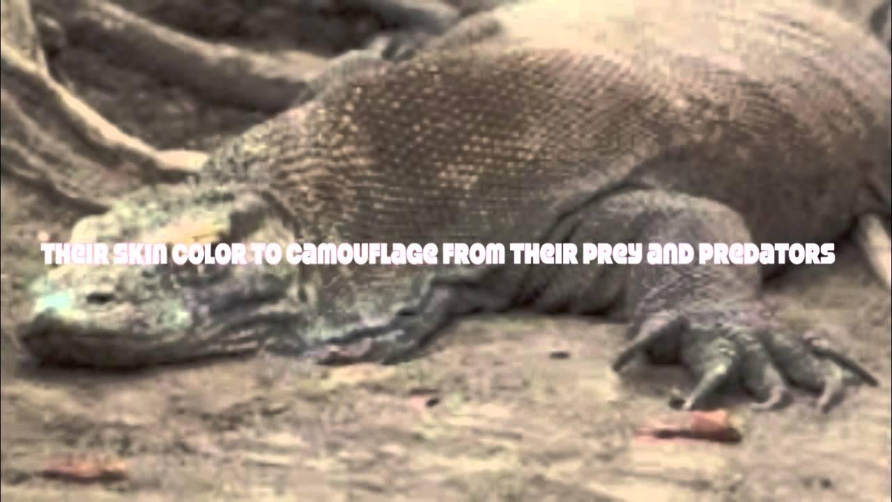 Ibu Mia's Biology Lesson Komodo Dragon Adaptation by Bryan ...