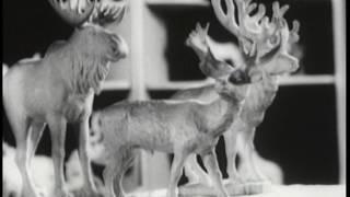 Сюжеты ЦТ 1960-х гг. об Армавире