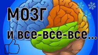 Мозг и все все все