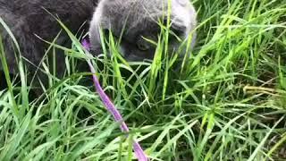 Кот Кекс первый раз вышел гулять