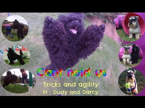 Can't hold us // dog tricks and agility