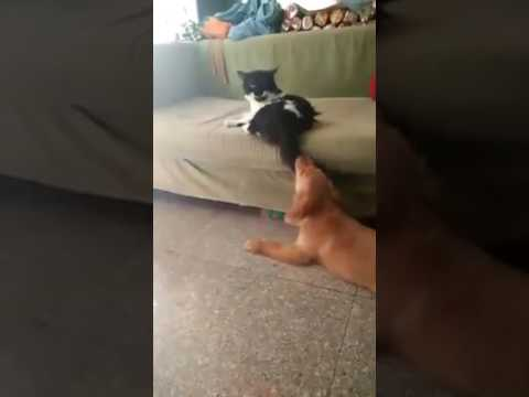 Cat slaps the dog