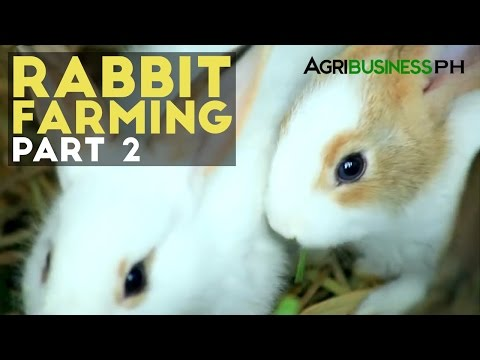 Rabbit Farming Part 2 : How to Manage a Rabbit Farm | Agribusiness Philippines