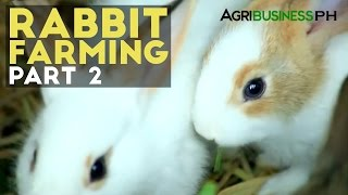 Rabbit Farming- Agribusiness Season 1 Ep6 Part2