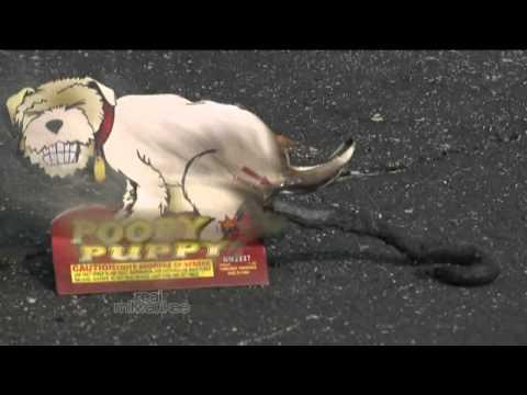 REAL MILWAUKEE Poop Dog