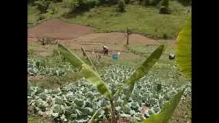 Climate Change and Its Impact on Jamaican Farmers-Short Version