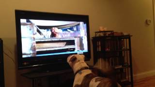 Tauren and the TV: Turner and Hooch
