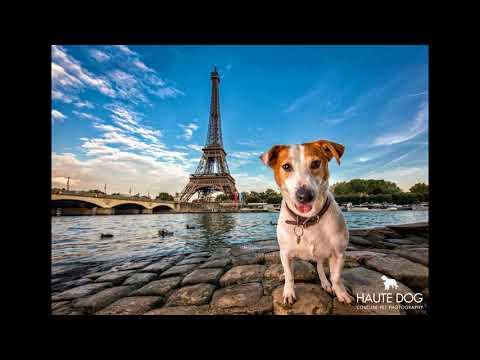 International Destination Pet Photography Holidays by Dallas Dog Photographer Haute Dog