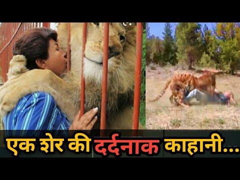 Lion Reunites With