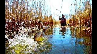 Караси Монстры Рыбалка Мечта Ловля карася на поплавок