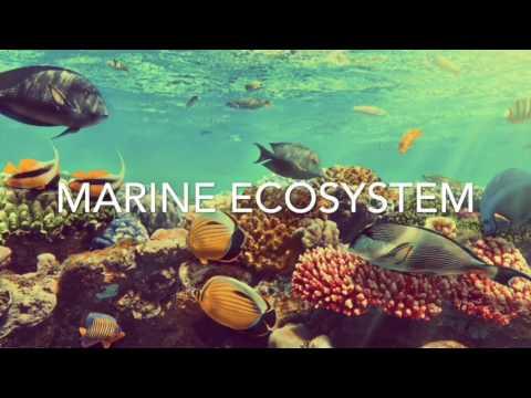 Marine ecosystem project