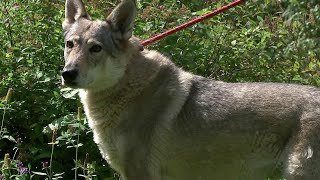 12 пород собак вошли в список потенциально опасных, который утвердило российское правительство.